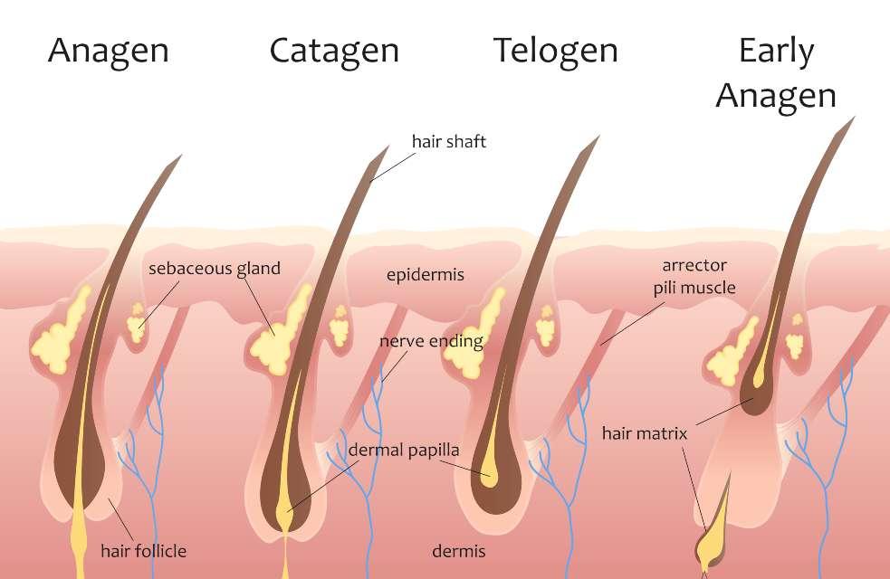 hair losing procedure