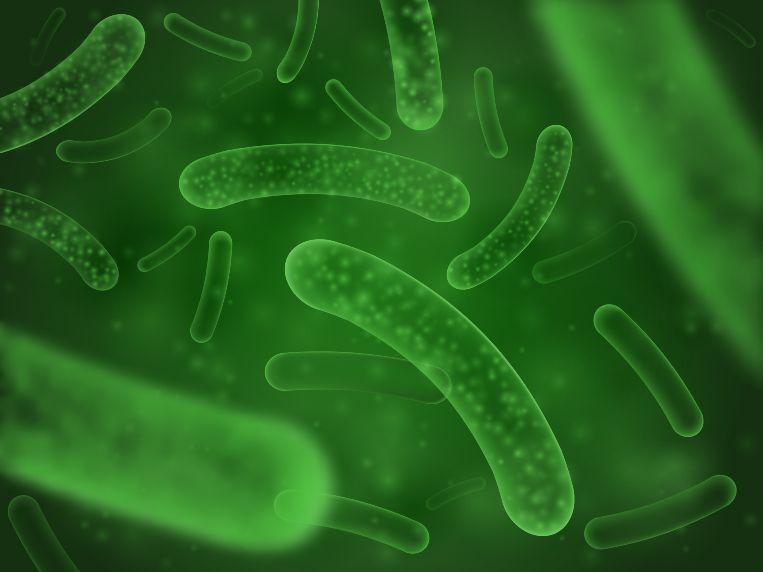 what are prebiotics and probiotics